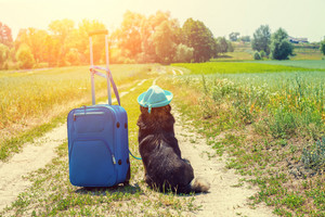 Dog wearing sun hat with travel bag sitting on dirt road in the field