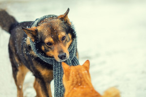dog with knitted scarf, tied around the neck and cat sniffing each other in winter