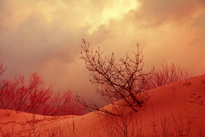 Dramatic autumn landscape with sandy dune, trees and cloudy stormy sky
