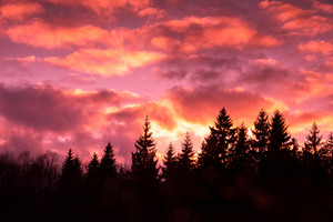 Dramatic purple sky over forest in evening