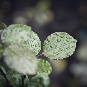 drops on leaves vintage background