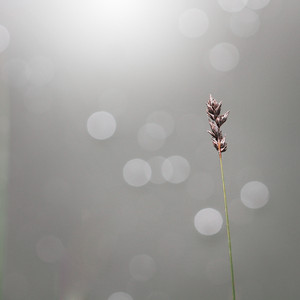 dry plant at grey sunny background
