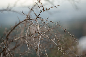 dry plants tree in forest in autumn