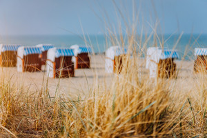 Dune grass and blue striped roofed chairs on sandy beach in background. Travemunde german favorite travel location