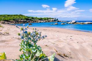 Empty beach with azure water on beautiful Sardinia island, Italy