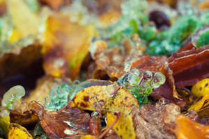 Fallen leaves with ice closeup