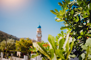 Fig tree foliage with local church tower and blue sky in background. Kefalonia island, Greece