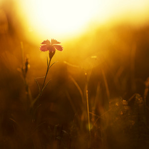 Flower. Nature field in morning sunshine