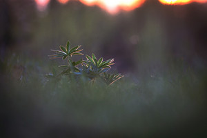 flower plant on summer morning sunrise