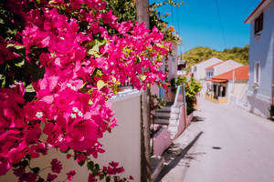 Flowers at narrow street in a picturesque Greek island. Sunny summer day, summer time, vacation in Europe