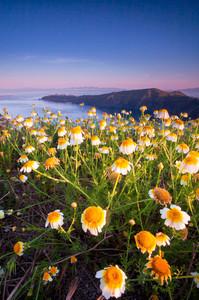 Flowers Awaken in Santorini