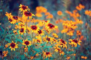 Flowers in a garden in summer