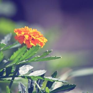 flowers in garden in spring