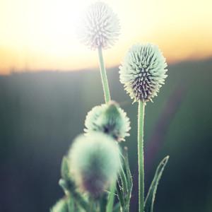 Flowers. Nature vintage meadow plants