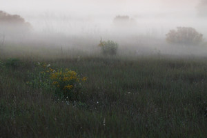 foggy field lamscape. Nature