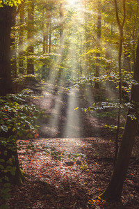 Forest path with sun rays comming through the tree leaves