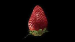 fresh strawberry on black background and a transparent drop pouring on it. Slowmotion water drop falling on strawberry
