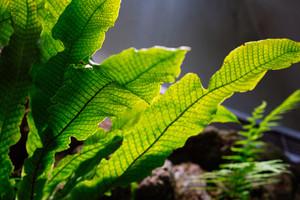 Freshness lush green tropic fern leaves