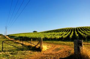Gate leading to beautiful vineyard