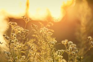 Golden sunset over meadow in summer