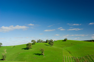 Gorgeous Field in the Adelaide Hills