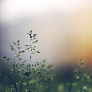 green grass on colourful nature background