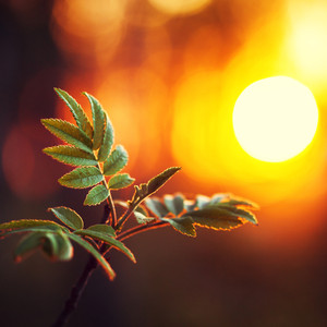 green leaves on orange sunrise background. Nature outdoor evening photo in forest