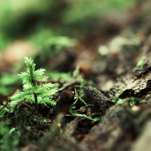green plant in forest. Nature outdoor