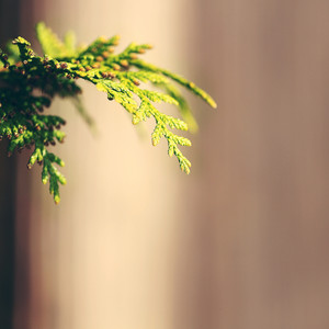 green tree on brown background