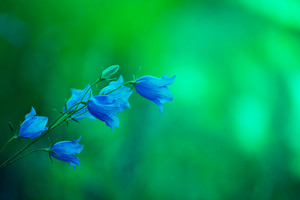 Green vintage blue bell flowers