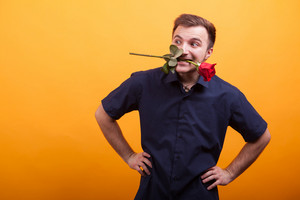 Handsome young man in blue shirt holding a red rose in his mouth over yellow background. Sexy man