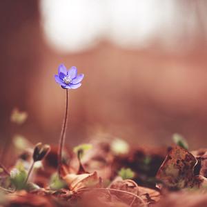 High wild blue flower in forest