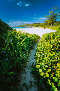 Hiking path overgrown with green plants leading to beautiful grand anse beach at La Digue island, Seychelles