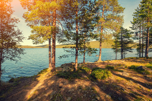 Lake shore in sunny day. Pine trees near lake. Finland, Europe