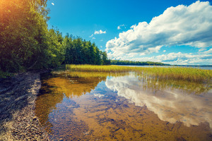 Lakeshore with trees and blue sky. Beautiful nature Finland