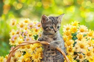 Little kitten in the garden with flowers on background