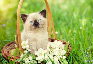 Little kitten sitting in a basket with jasmine flowers on the grass