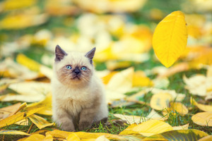 Little kitten sitting on autumn leaves in autumn