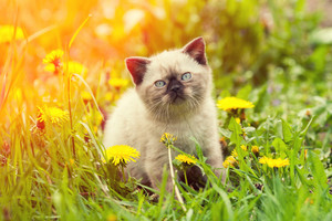 Little kitten sitting on the grass and looking at camera