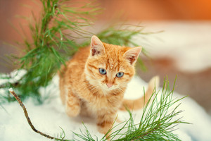 Little red kitten walking in the snowy forest