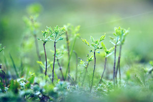 little trees in forest. Vintage nature background