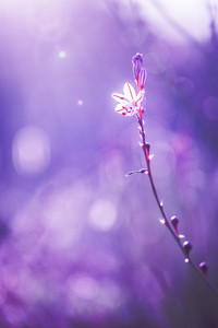 little wite wild meadow beautiful spring flower on nature vintage colorful dark tonned background. Outdoor fresh photo on bright sunshine in evening