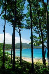 Looking through the tall trees onto the beautiful beach