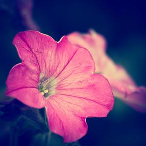 Macro flowers. Vintage nature photo