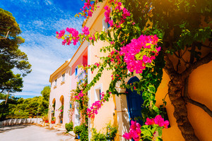 Magenta fuchsia flowers on the walkway in small mediterranean Assos village. Traditional greek house on street with a big bougainvillea flowers