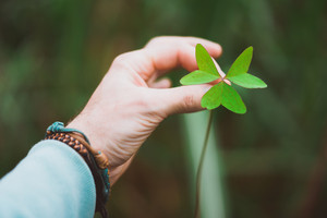 man hand holding an exotic green clover leave. Green blurred background