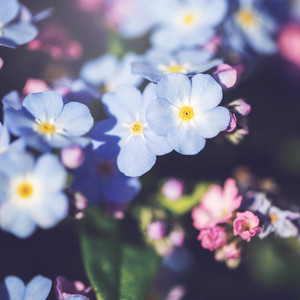 many colorful soft flowers. Nature vintage background