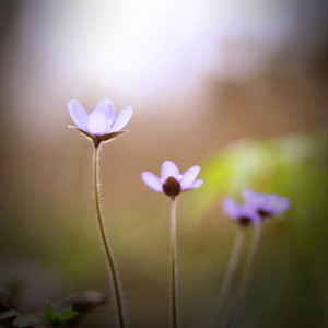 many delicate purple wildflowers on green nature background