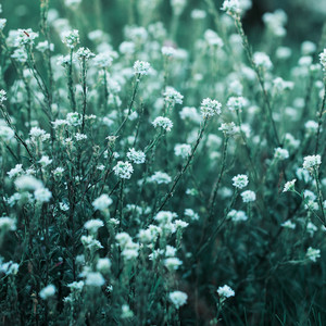 many white meadow flowers on bright green grass natural background. Fresh autumn morning