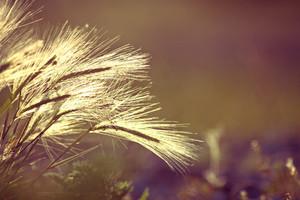 Meadew flowers in field